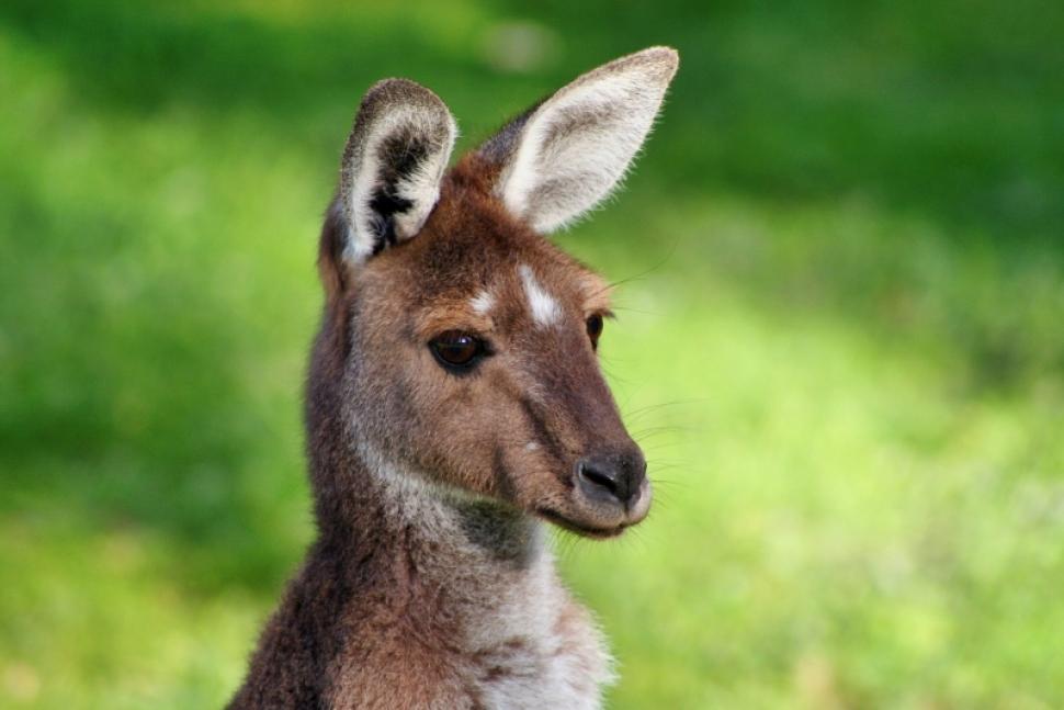 Avustralya Yaşam Şartları