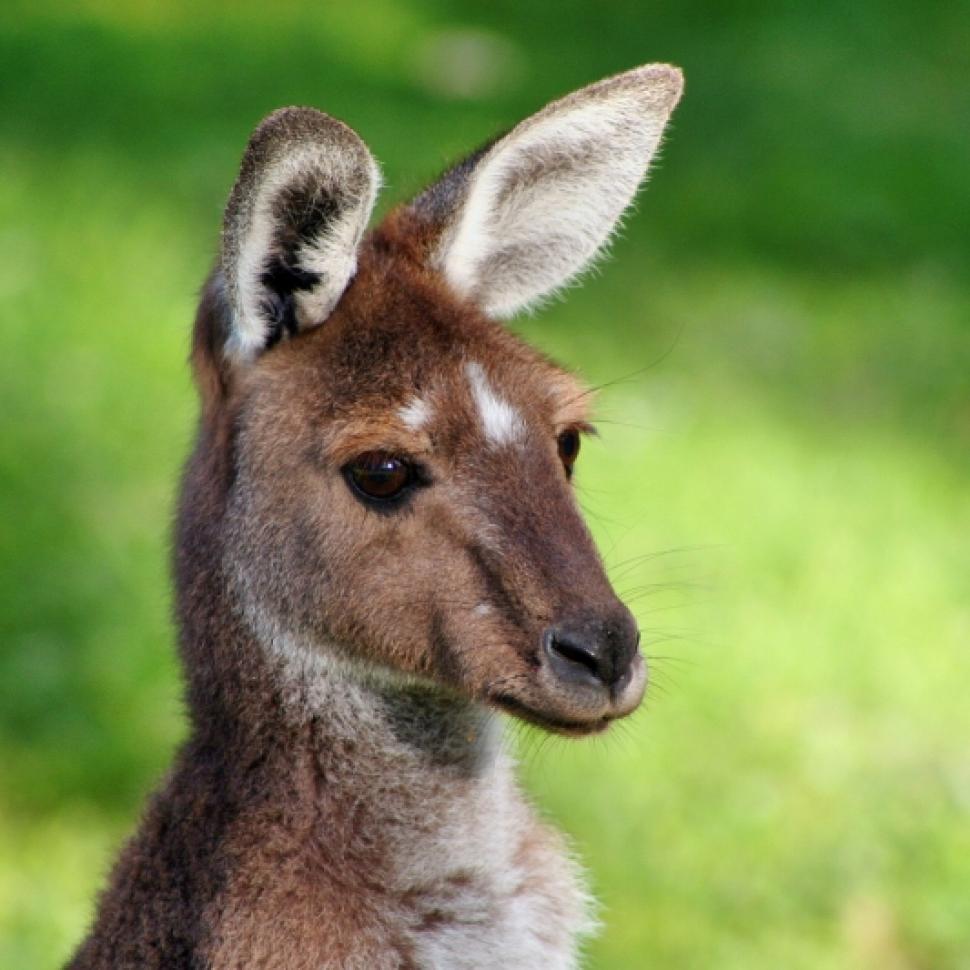 Avustralya çok güzel bir ada ülkesidir.